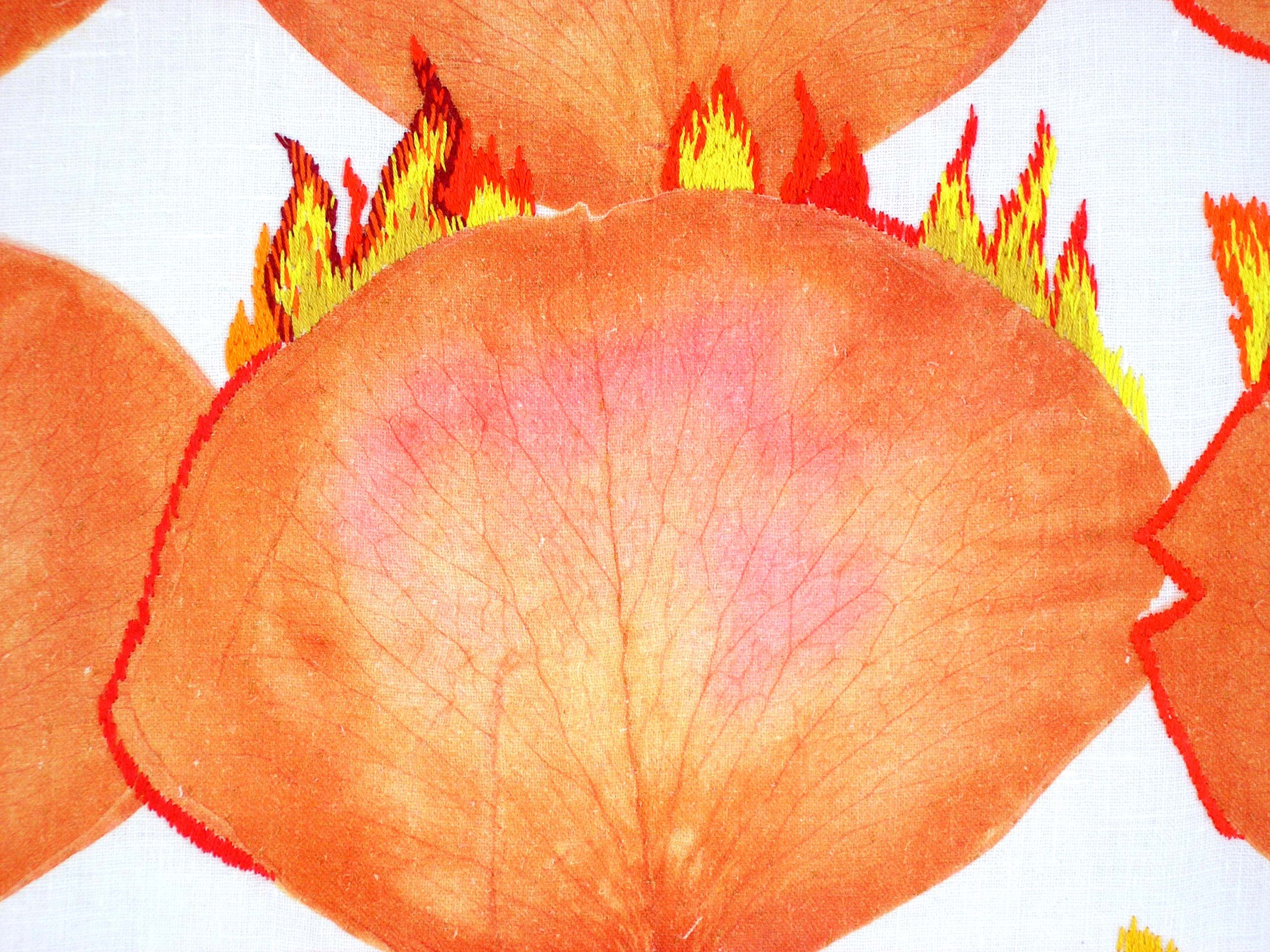Detail Flaming Roses